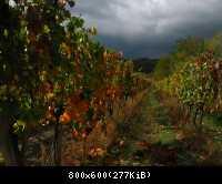 Jeseň vo vinici