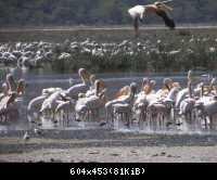 Africke safari 02
