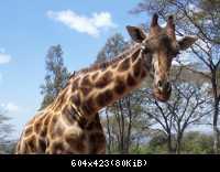 Africke safari 10