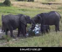 Africke safari 25